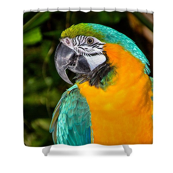 Polly II Shower Curtain
