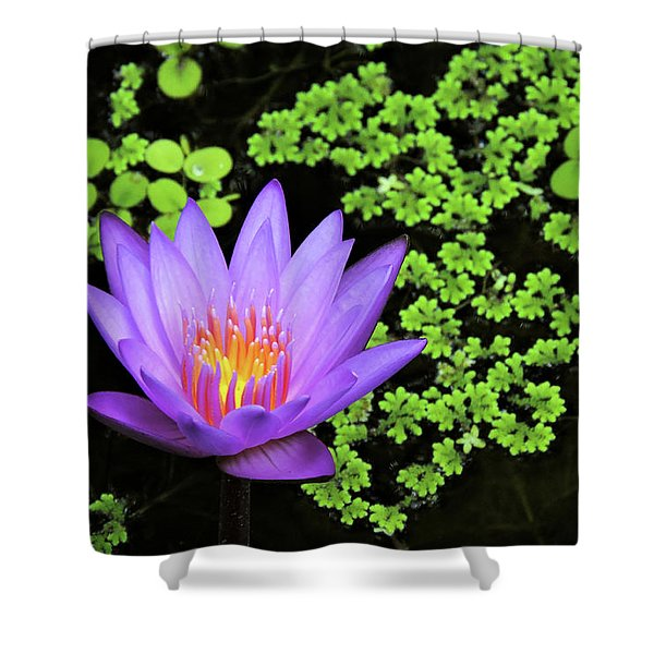 Pond Beauty Shower Curtain