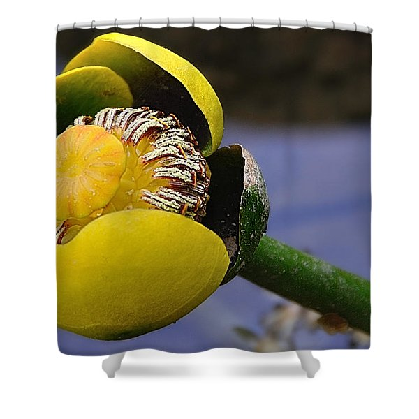 Pond Lily In Bloom Shower Curtain