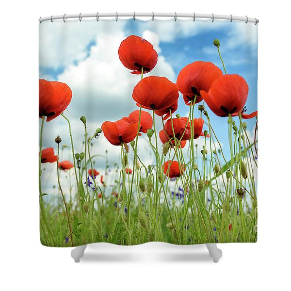 Poppies In Field Shower Curtain
