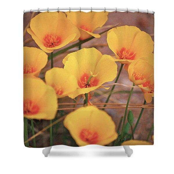 Poppies On Mount Lemmon Shower Curtain