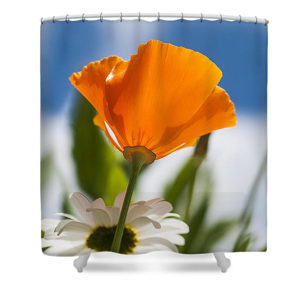 Poppy And Daisies Shower Curtain