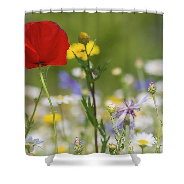 Poppy In Meadow  Shower Curtain
