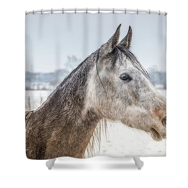 Portrait Amigo Shower Curtain