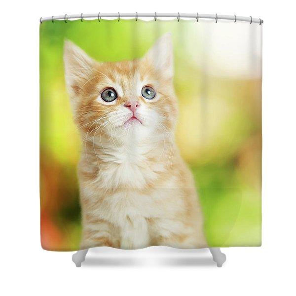 Portrait Cute Kitten Blurred Scenic Background Shower Curtain