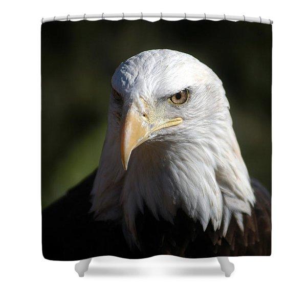 Portrait Of A Bald Eagle Shower Curtain