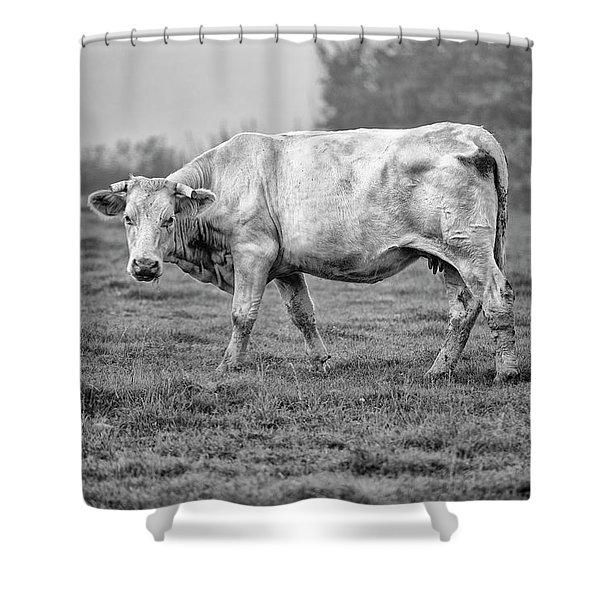 Portrait Of A Cow Shower Curtain