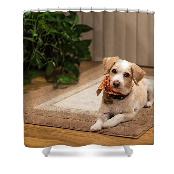 Portrait Of A Dog Shower Curtain