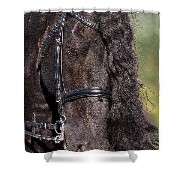 Portrait Of A Friesian Shower Curtain