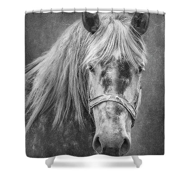 Portrait Of A Horse Shower Curtain