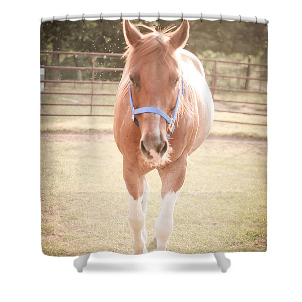 Portrait Of A Light Brown Horse In A Pasture Shower Curtain