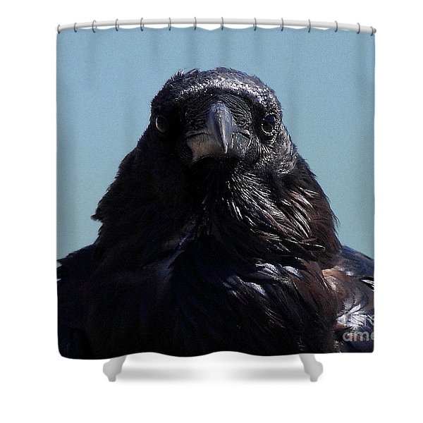 Portrait Of A Raven Shower Curtain