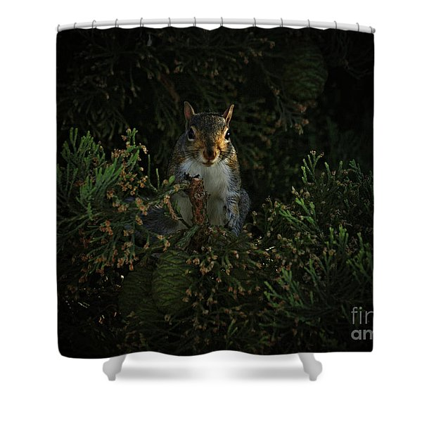 Portrait Of A Squirrel Shower Curtain