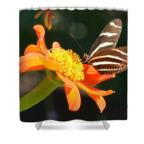 Portrait Of A Zebra Heliconia Shower Curtain