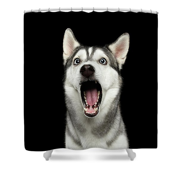 Portrait Of Amazement Siberian Husky Shower Curtain