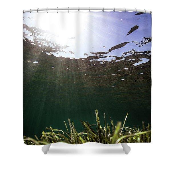Posidonia Shower Curtain