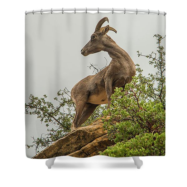 Posing For The Camera Shower Curtain