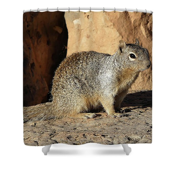 Posing Squirrel Shower Curtain