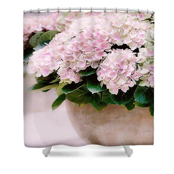 Pot Of Hydrangeas Shower Curtain
