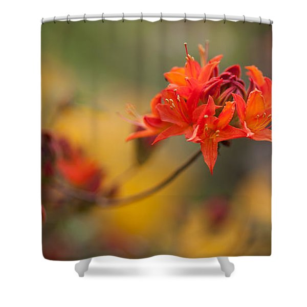 Potential Shower Curtain by Mike Reid