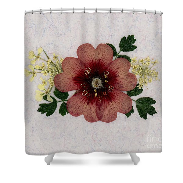 Potentilla And Queen-ann's-lace Pressed Flower Arrangement Shower Curtain