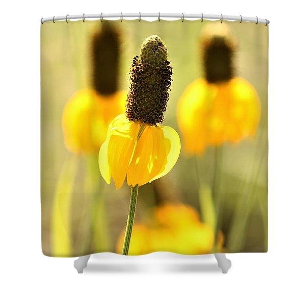 Prairie Coneflower In Morning Light Shower Curtain