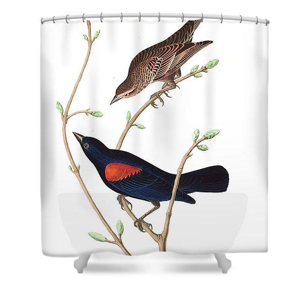 Prairie Starling Shower Curtain