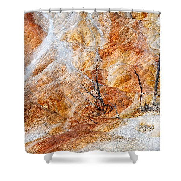 Prehistoric Trees Shower Curtain