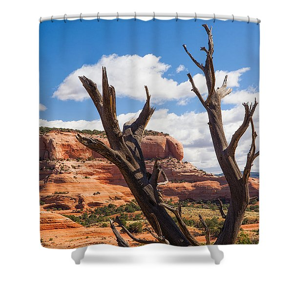 Preserved Shower Curtain