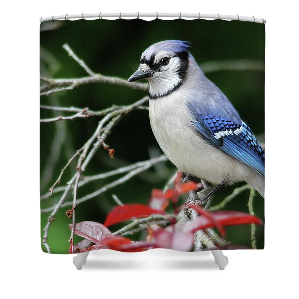 Pretty Blue Jay Shower Curtain
