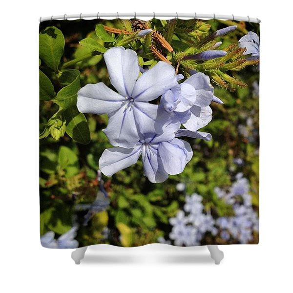 Pretty Flowers Spotted In Gaudi Park Shower Curtain