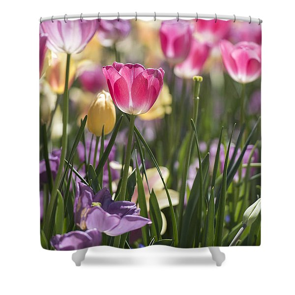 Pretty In Pink Tulips Shower Curtain