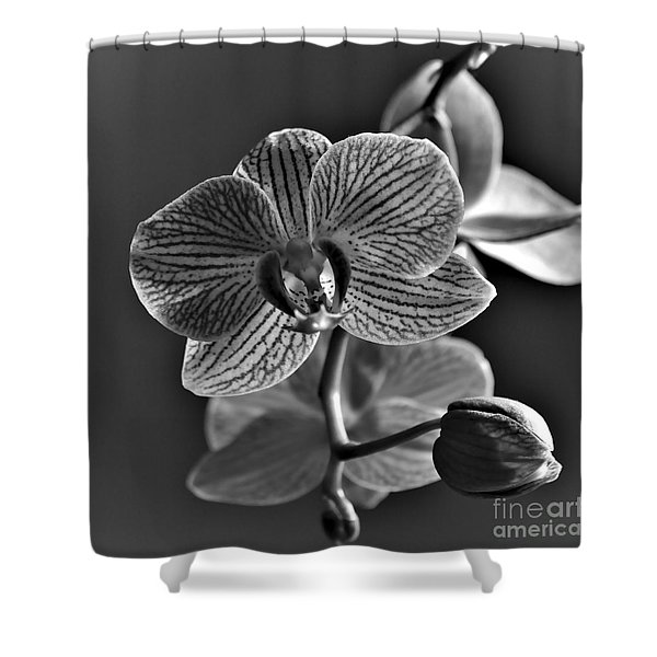 Shower Curtain featuring the photograph Pretty Orchid Bw by Jeremy Hayden