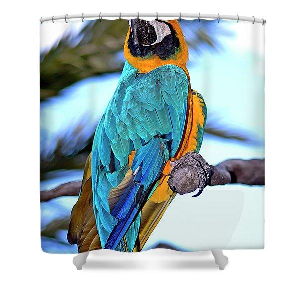 Pretty Parrot Shower Curtain