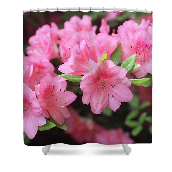 Pretty Pink Azalea Blossoms Shower Curtain