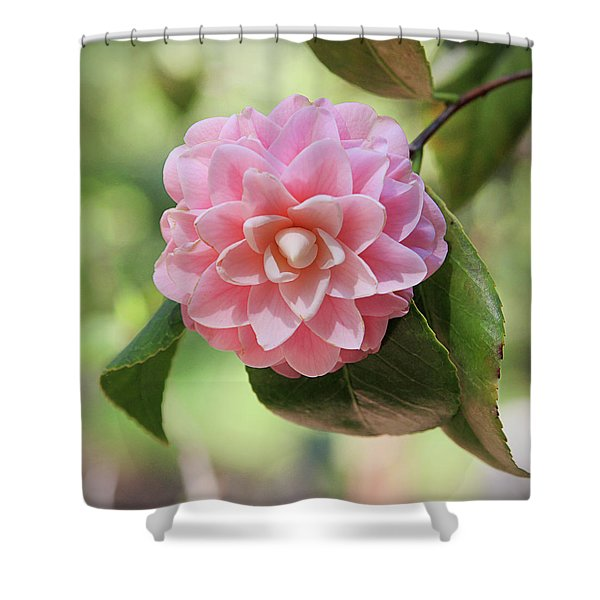 Pretty Pink Camellia 2- Photography By Linda Woods Shower Curtain