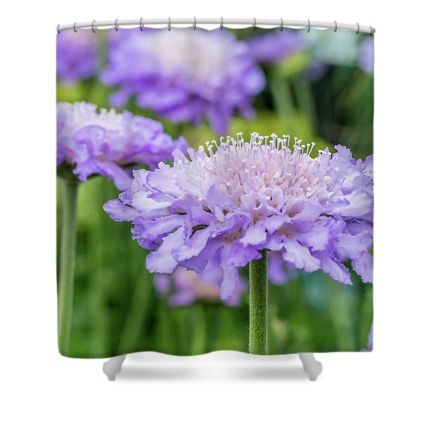 Shower Curtain featuring the photograph Pretty Purple by Nick Bywater