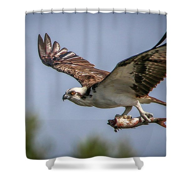 Shower Curtain featuring the photograph Prey In Talons by Tom Claud