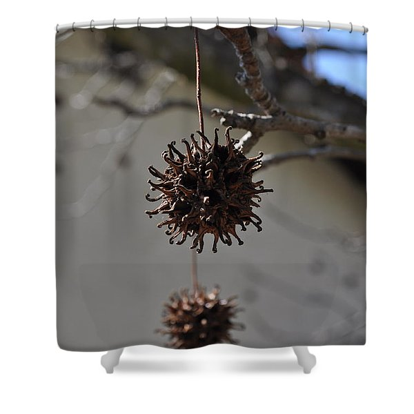 Prickly Liquidamber Pod Shower Curtain