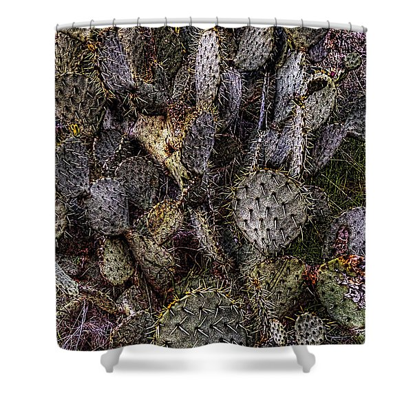 Prickly Pear Cactus At Tonto National Monument Shower Curtain