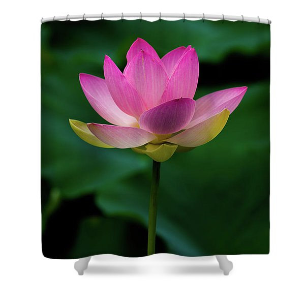 Profile Of A Lotus Lily Shower Curtain