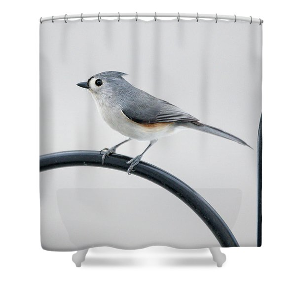 Profile Of A Tufted Titmouse Shower Curtain