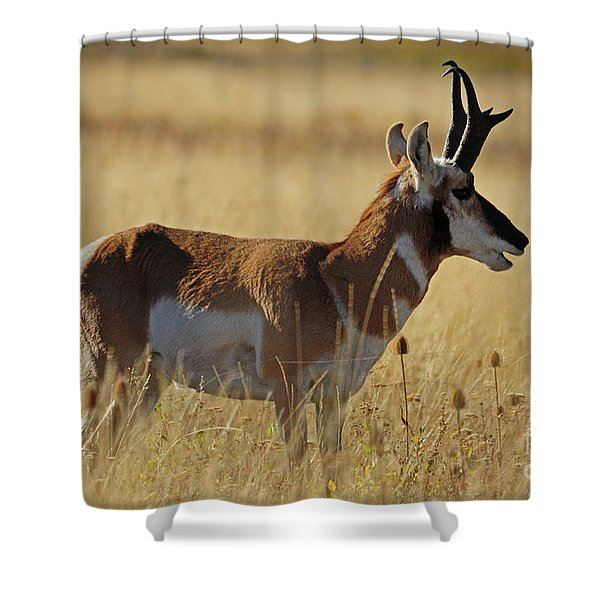 Pronghorn Antelope Shower Curtain