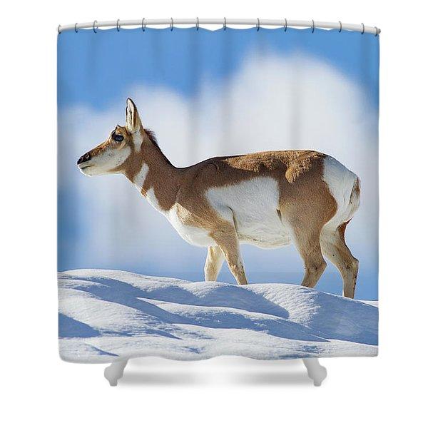 Pronghorn Doe On Snowy Ridge Shower Curtain
