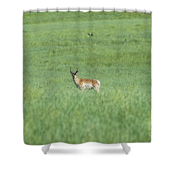 Pronghorn In A Sea Of Green Shower Curtain