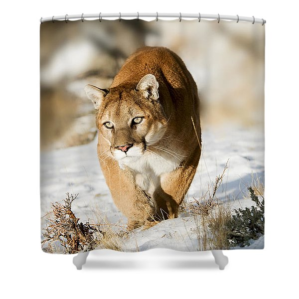 Prowling Mountain Lion Shower Curtain