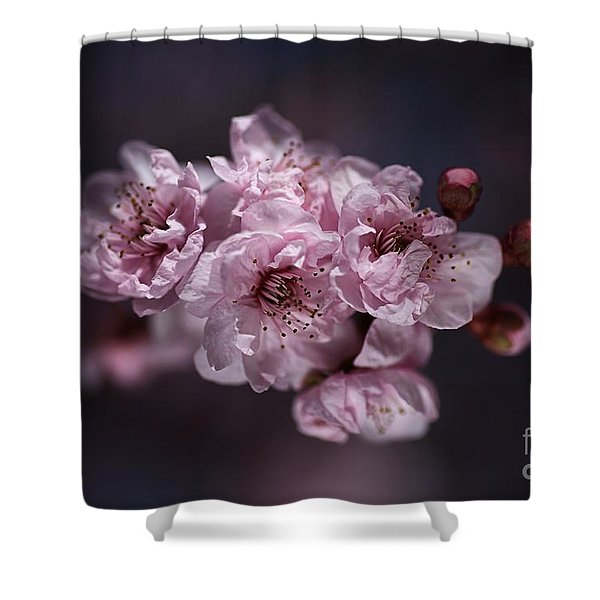 Prunus A Pink Spring Shower Curtain