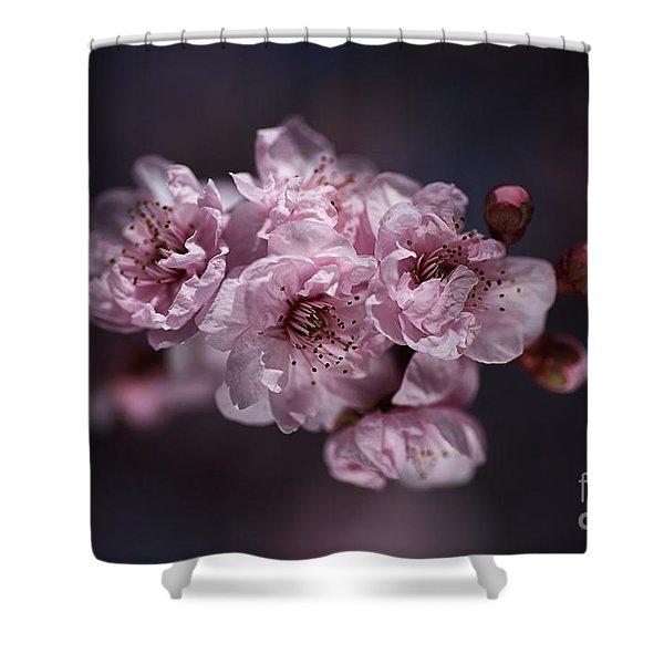 Prunus A Pink Spring Shower Curtain