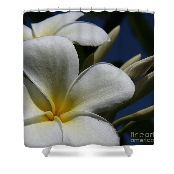 Pua Lena Pua Lei Aloha Tropical Plumeria Maui Hawaii Shower Curtain
