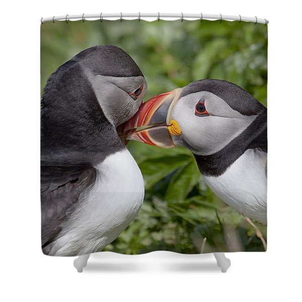 Puffin Love Shower Curtain
